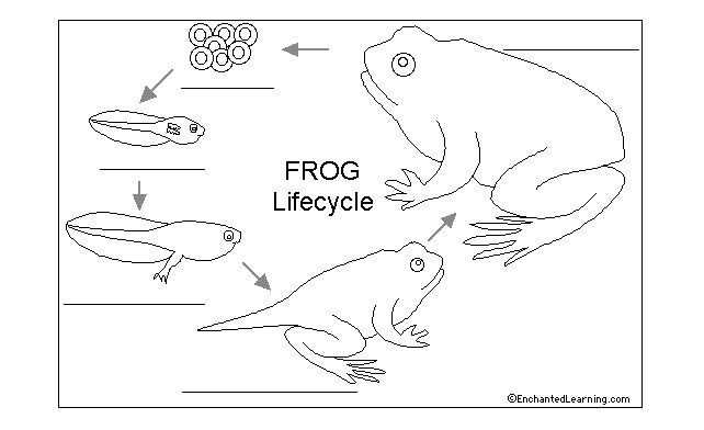 "Week 2: Frog and Butterfly Life Cycles - ""At Last"""